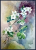 Цветы весны
