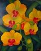 Орхидеи - маленькие солнышки