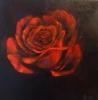 Ночная роза